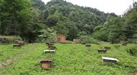 蔡西农家蜂蜜的图标